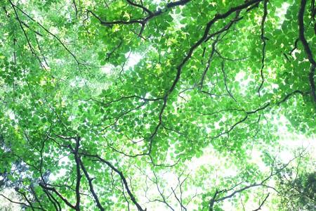 2015.05.26 瀬谷市民の森 モリソラ