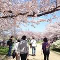 Photos: F企業お花見!♪w (*^ー^)ノ♪ @ S公園
