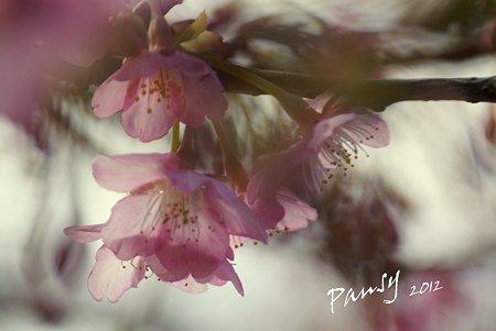 桜ふぁんたじぃ~
