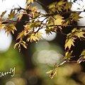 写真: 若葉・・1