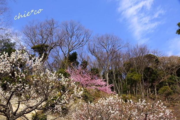 北鎌倉-423