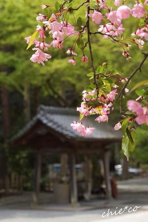 鎌倉-162