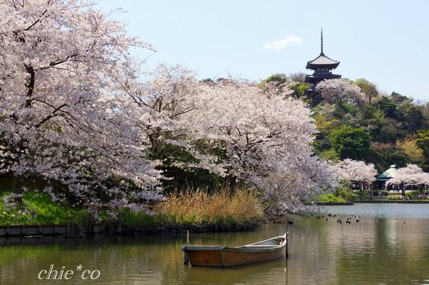 三渓園~桜咲くころ~-238