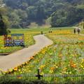 写真: くりはま花のくに-262