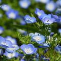 写真: くりはま花のくに-267