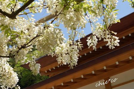 鎌倉-372