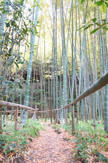 鎌倉 英勝寺-302