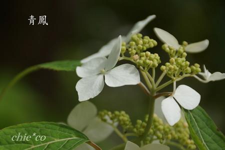 Kamakura-743