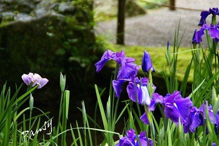 明月院後庭園・・8