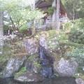 貞義堂裏の宿り木のお堂。石楠花と竹林の美しい季節です。さて御祈祷...