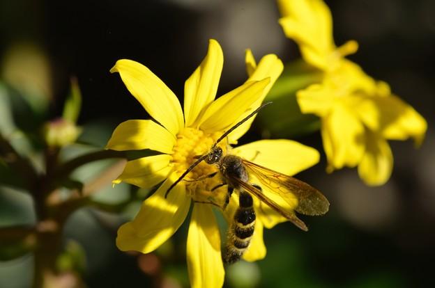 あたま・・・花粉だらけですけど^^