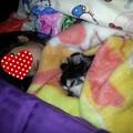 Photos: 子供と犬の寝姿って最高に可愛い~♪