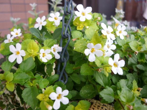Photos: 2011.11 garden 086