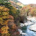 鬼怒川の紅葉