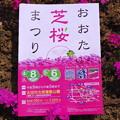 Photos: おおた芝桜まつり