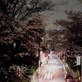 Photos: 夜桜坂?