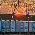 Photos: さくら道の朝日