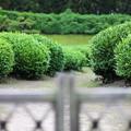 Photos: 茶畑