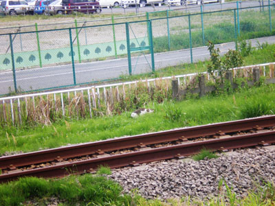 110430 JR相模線・海老名駅