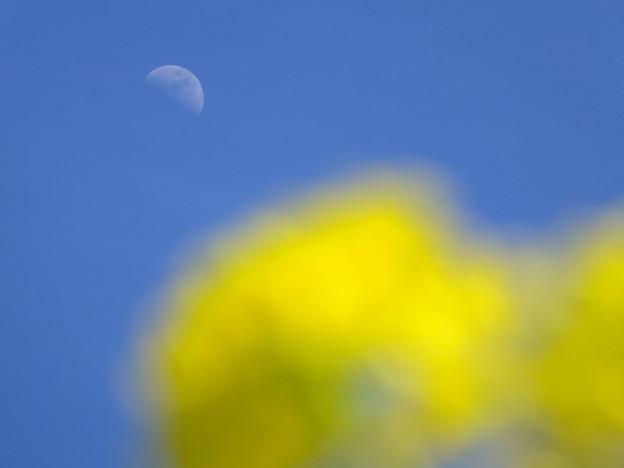 月とコラボ