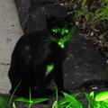 緑の瞳をもつ・・・