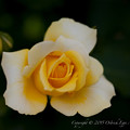 Photos: flowers-6949