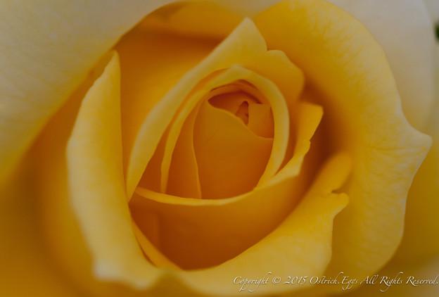 Photos: flowers-6950