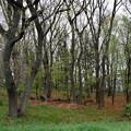 写真: 側を通る道から見た緑地