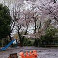 写真: 往く春の名残り
