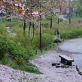 写真: 往く春の名残り2