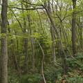 頂上付近の木立ち
