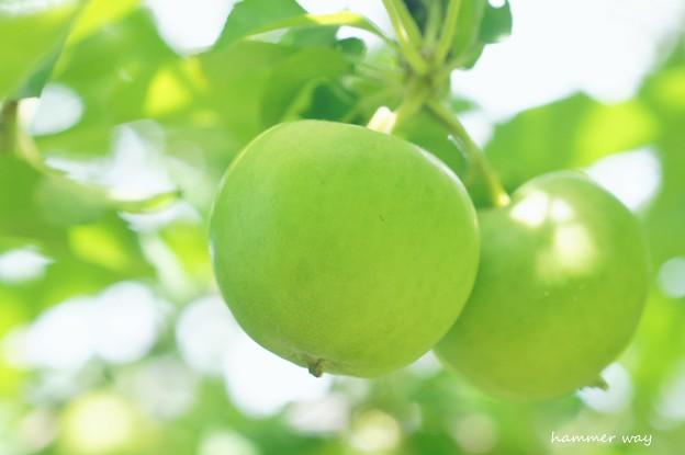 となりのリンゴ