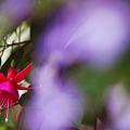 写真: 踊る花