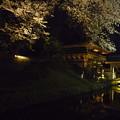 Photos: 鑁阿寺の夜桜?2015.4.2