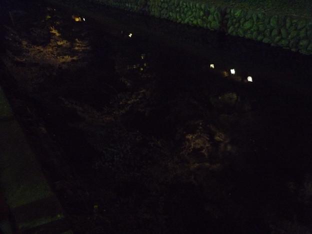 写真: 鑁阿寺のお堀の中の夜桜2015.4.2