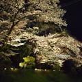 足利の鑁阿寺の夜桜2015.4.2