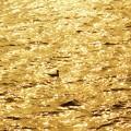 ちゃっぷちゃっぷと波間に浮かぶ~カモメのジョナサン~