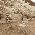 Photos: 燗銅壺と桜