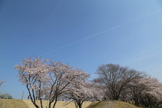 青空に飛行機雲一筋