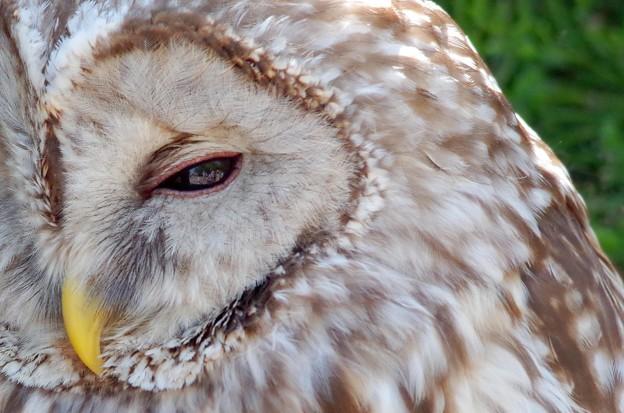 IMGP4641周南市、徳山動物園フクロウの瞳の中