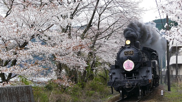 4K 大井川鉄道さくら号