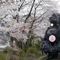 Photos: 4K 大井川鉄道さくら号