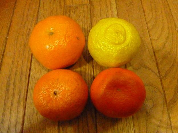 南郷の柑橘類