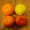 Ảnh: 南郷の柑橘類
