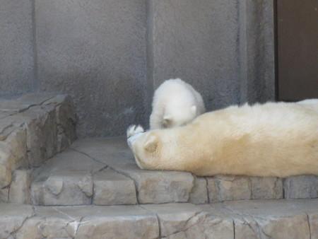 お昼寝かあさん