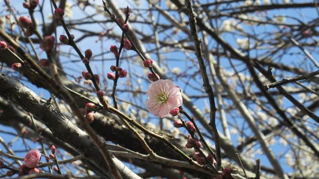 15.03.05.片倉城跡公園(八王子市)