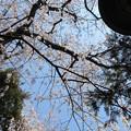 Photos: 15.03.30.威光稲荷尊天(南池袋)