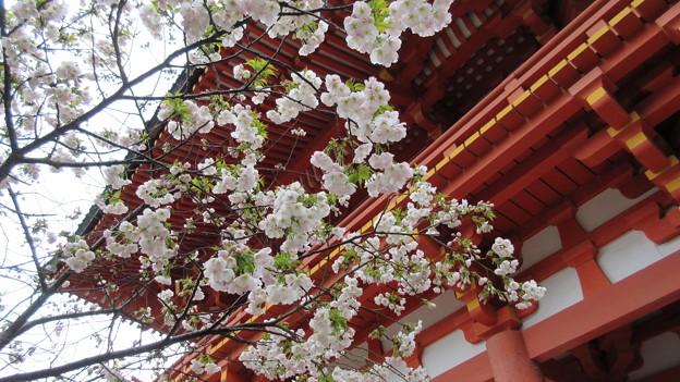 写真: 15.04.07.賀茂別雷神社(上賀茂神社。京都市北区)