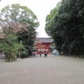 15.04.07.賀茂御祖神社(下鴨神社。左京区)