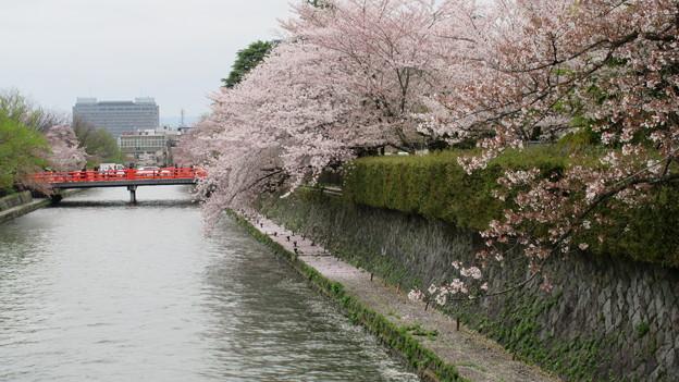 Photos: 15.04.07.白川(京都市左京区)